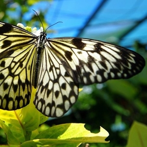 Высоко рентабельный бизнес ферма Живых Тропических Бабочек