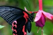 Высоко прпбыльный бизнес ферма Живых Восхитительных Бабочек  из Амазонки